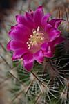 Plant_20120516_001_