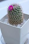 Plant_20120516_003_