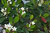 Plant_20120516_004_
