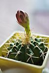 Plant_20120607_001_