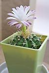 Plant_20120610_003_