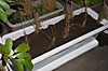 Plant_20130314_003_