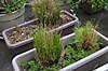 Plant_20130322_004_