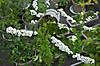 Plant_20130322_005_