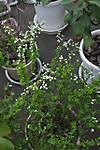 Plant_20130322_006_