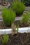 Plant_20130329_003_