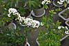 Plant_20130329_004_