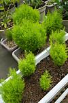 Plant_20130410_002_