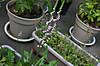 Plant_20130627_002_