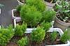 Plant_20130627_003_