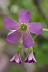 Plant_20130704_002_