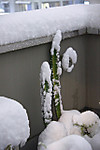 Snow_20140215_005_