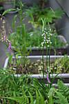 Plant_20140619_001_