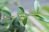 Plant_20200530_001_