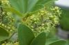 Plant_20200624_001_