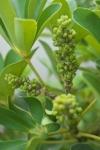 Plant_20200624_002_