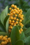 Plant_20200804_001_