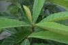 Plant_20200804_003_