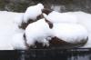 Snow20200329_009_